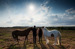 Equine Photography New Forest